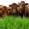 Tax Carbon, Not Meat Part 1: Differentiating Livestock Management Practices