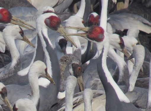 Korean Demilitarized Zone Essential to Thousands of Migratory Birds